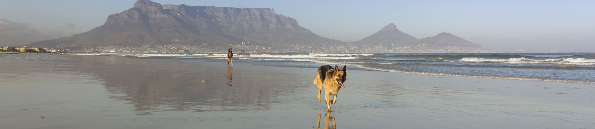 pet export south africa