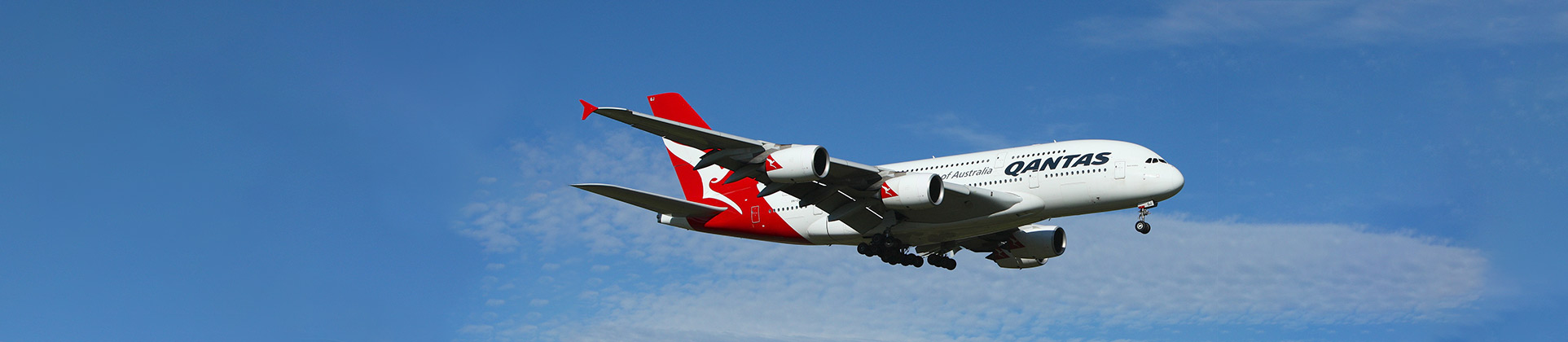 Qantas Pet Travel