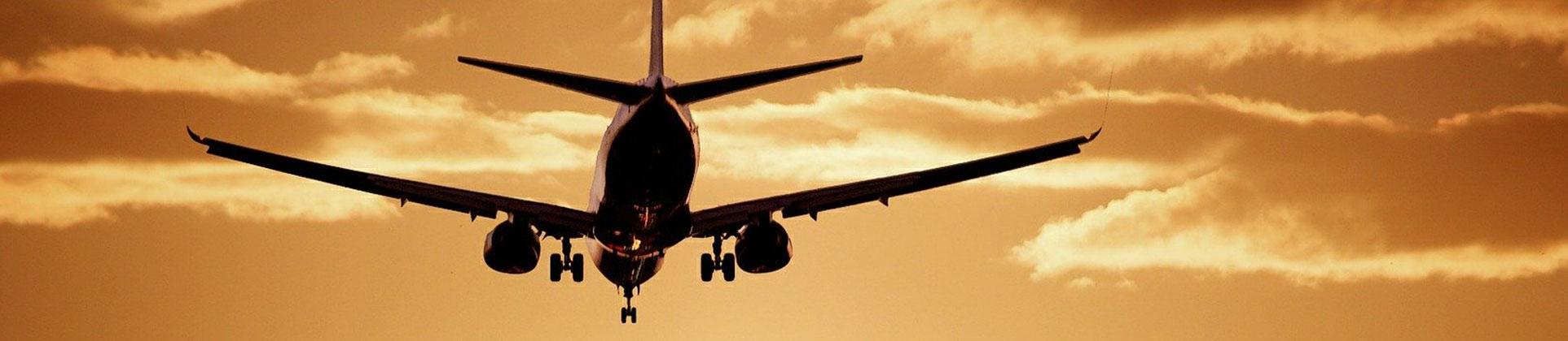 Thai Airways Pet Travel