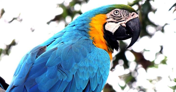 Bird export with Emirates