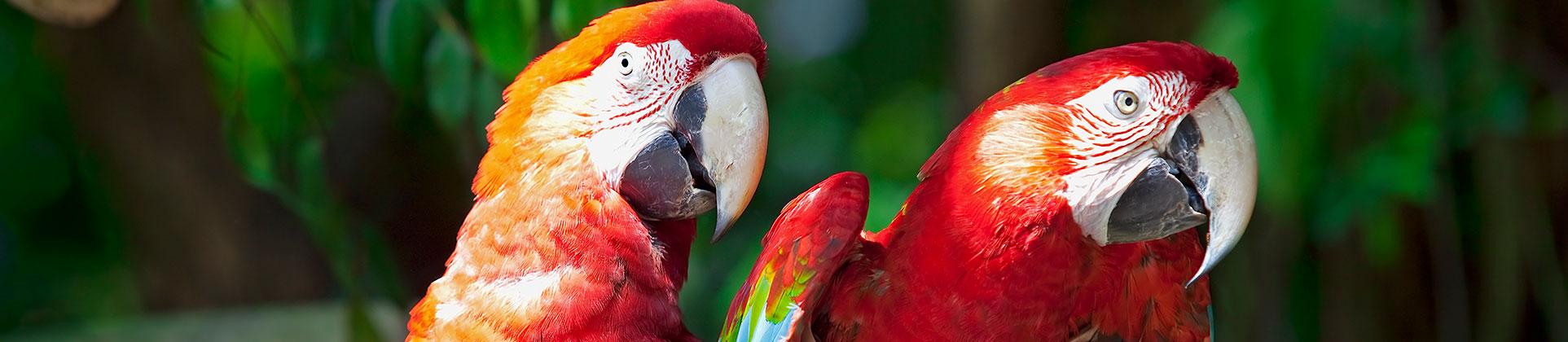 bird export
